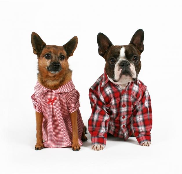 Utklädnad hund
